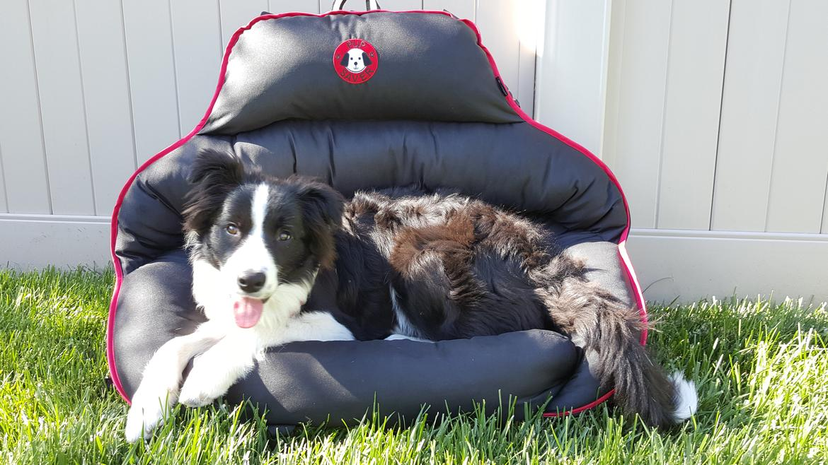 Pupsaver 45 Rear Facing Canine Car Seat Tested News