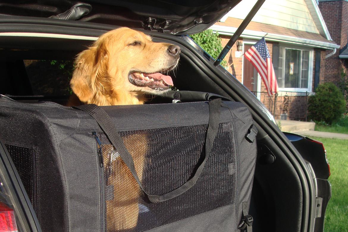 jeep_dog_kennel_jb.JPG