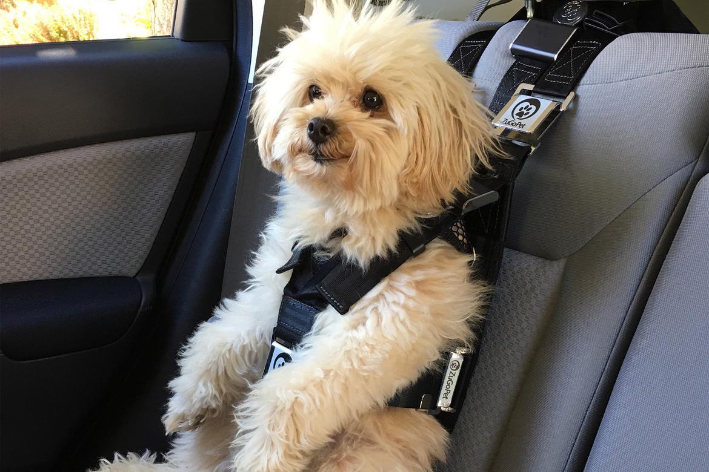 Zugo Pet S Rocketeer Car Seat