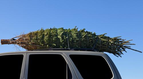 Aaa Christmas Tree Farm