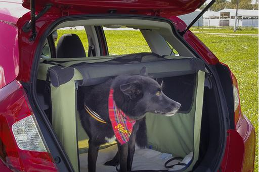 Drive Safely for National Dog Day