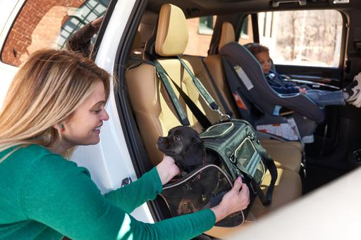 Animal Lovers Have Two New Crash-Tested Products to Keep Pets Safe